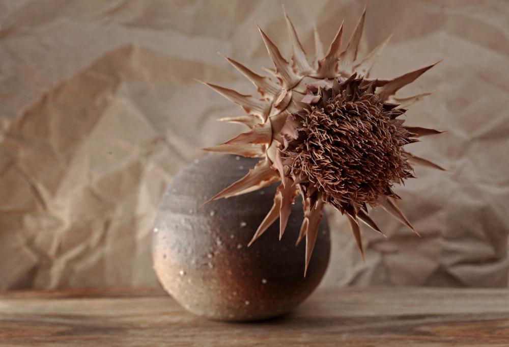 Dried Cardoon (Cynara cardunculus)
