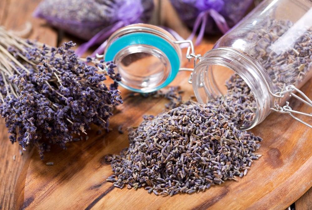 Dried Lavender (Lavandula angustifolia)
