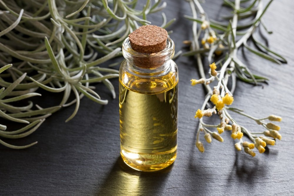 Oil and dried Curry Plant(Helichrysum italicum).