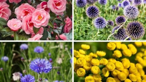 The best flowers for dried flowers.