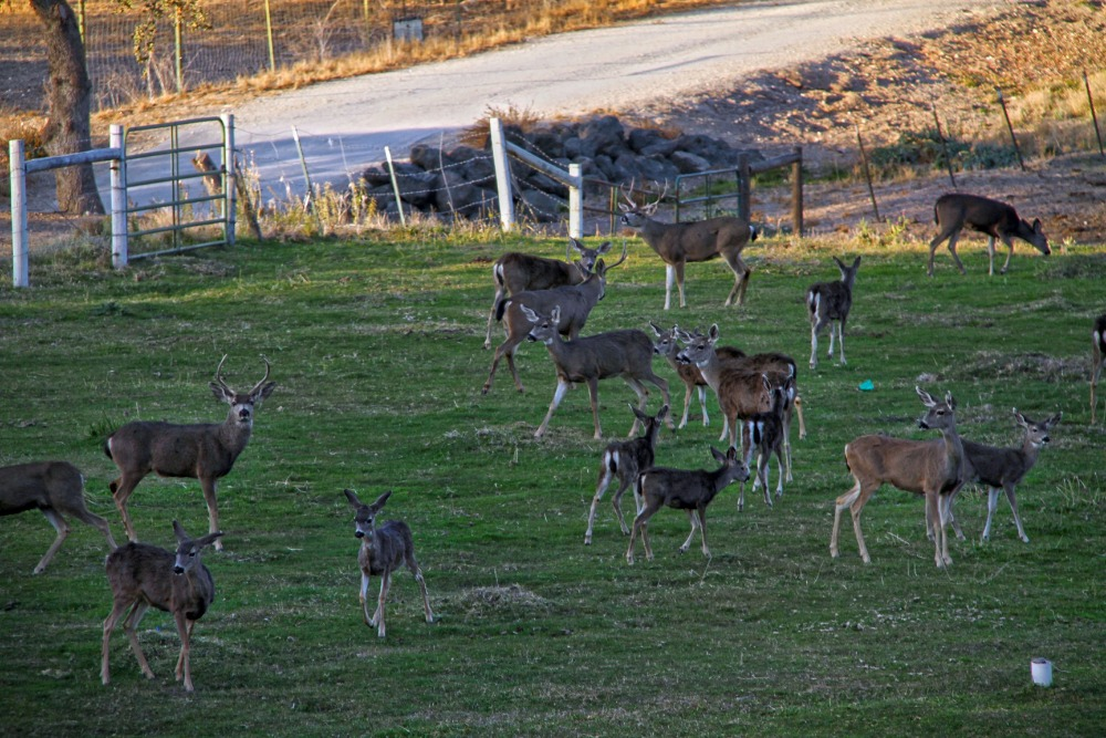 A look at the animals living inside the ranch. Images courtesy of Toptenrealestatedeals.com.