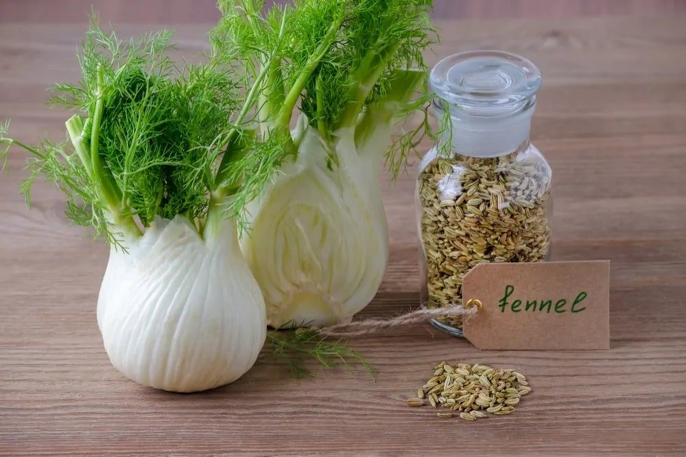 7 Different Types of Fennel