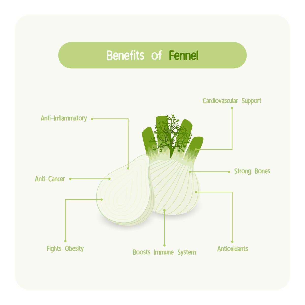 Fennel Nutritional Chart