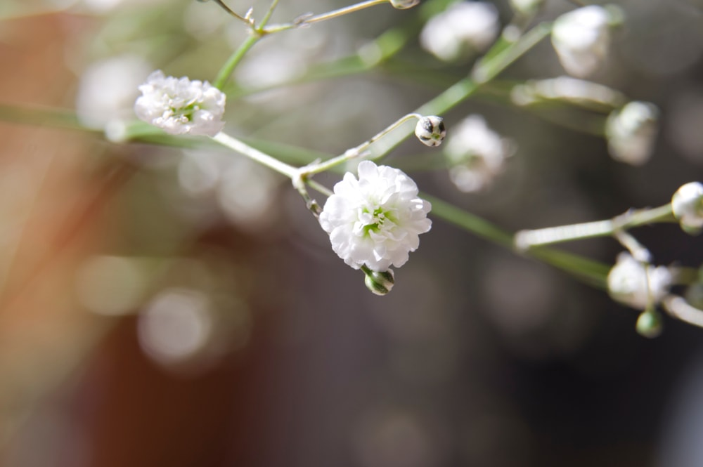 A close up of a Baby's Breath flower.