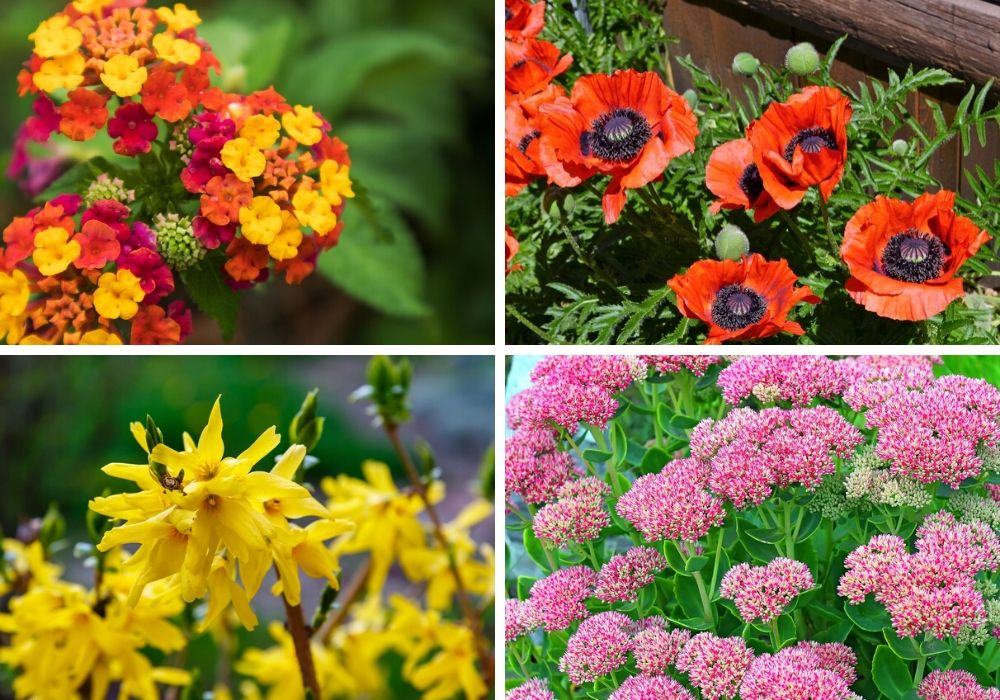 The various flowers that don't need much water.