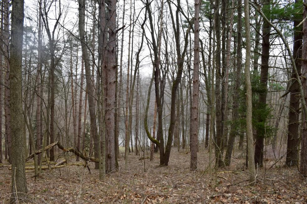 The surrounding landscape is filled with tall trees, grass and shrubs that give the house a sense of isolation. Images courtesy of Toptenrealestatedeals.com.