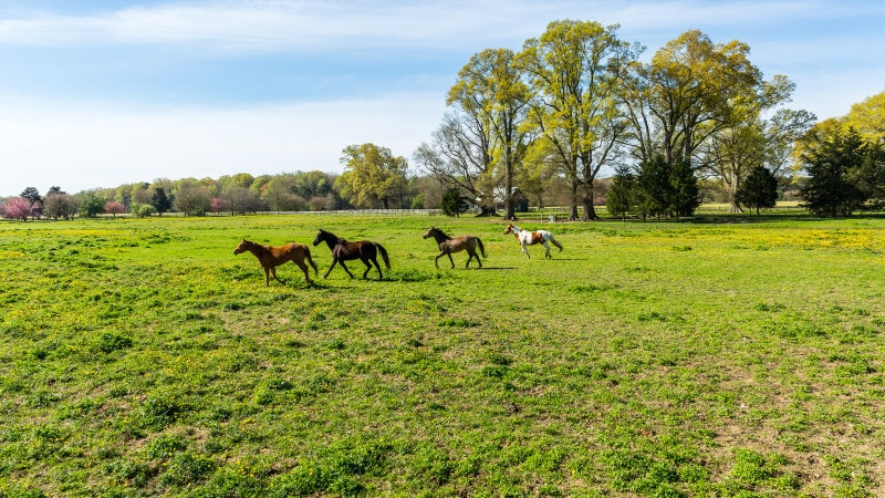 This farm has lots of open spaces of lush grass where horses can run freely. Images courtesy of Toptenrealestatedeals.com.