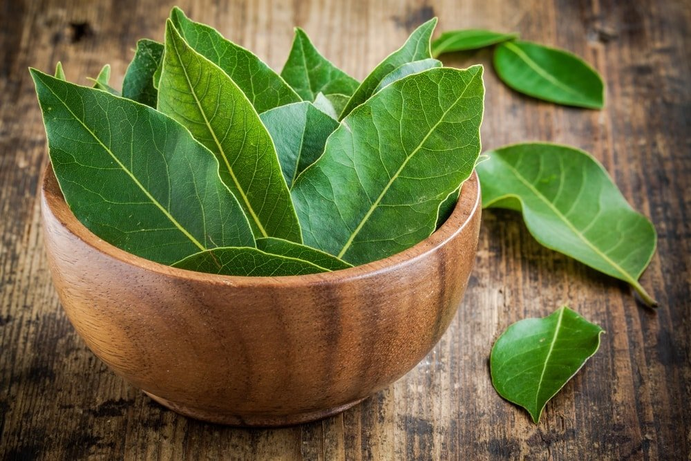 A bunch of fresh bay leaves placed in a wooden bowl.
