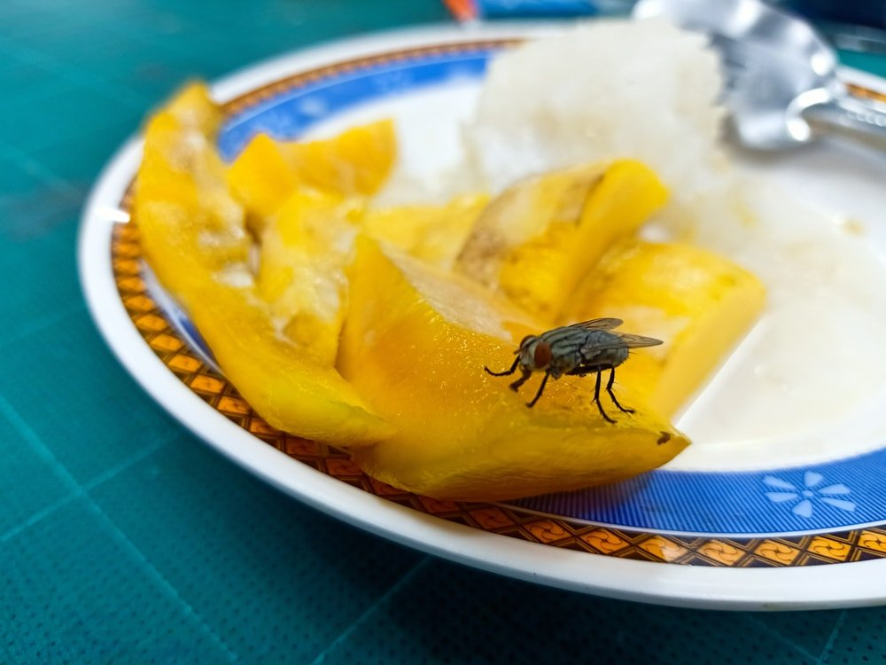 A housefly on a rotting piece of fruit.