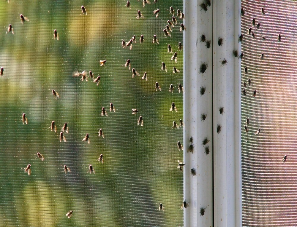 A swarm of houseflies congregating on the screen.
