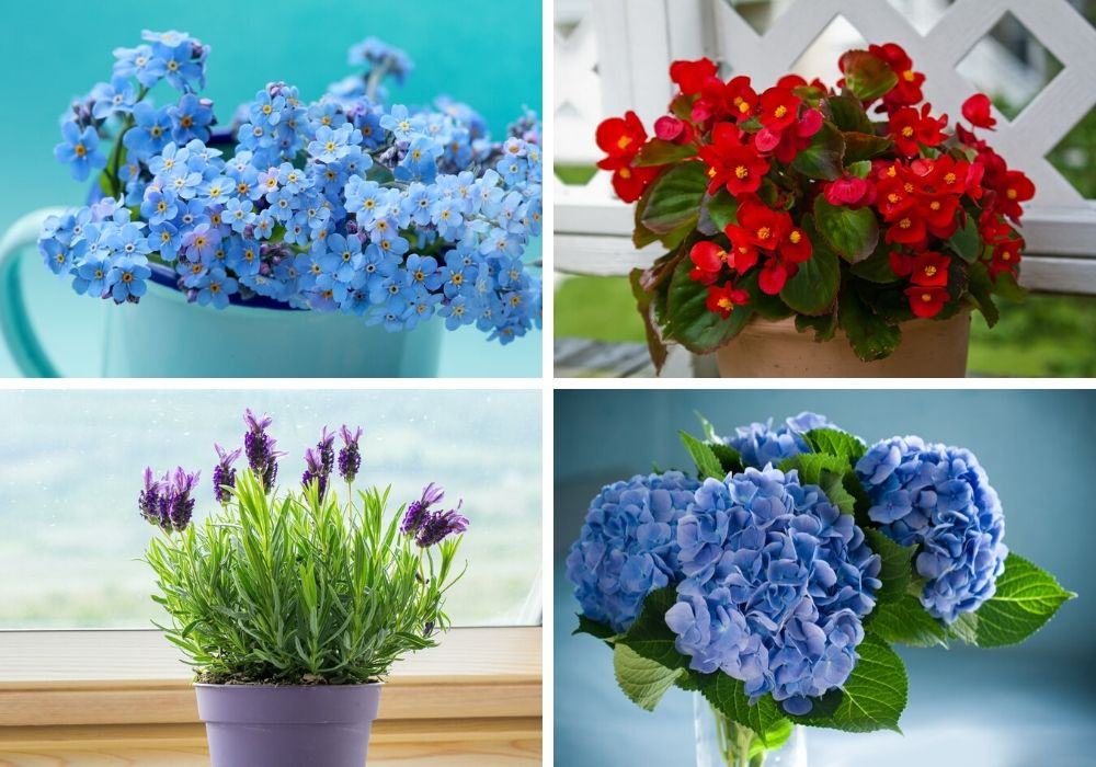 The ideal flowers for saying thank you to someone.