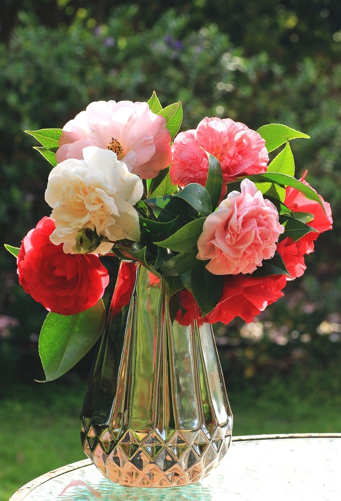 A cluster of colorful camellias placed in a vase.