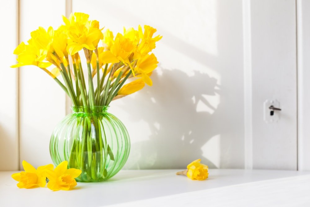 A bouquet of vibrant yellow daffodils placed in a glass vase.