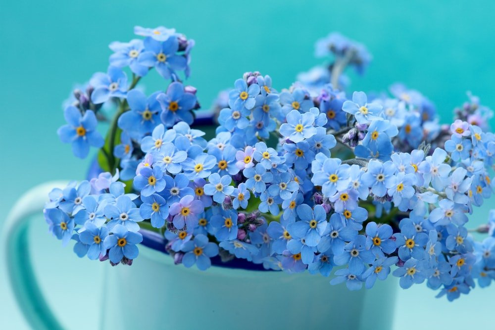 Clusters of charming forget-me-nots placed in a mug.