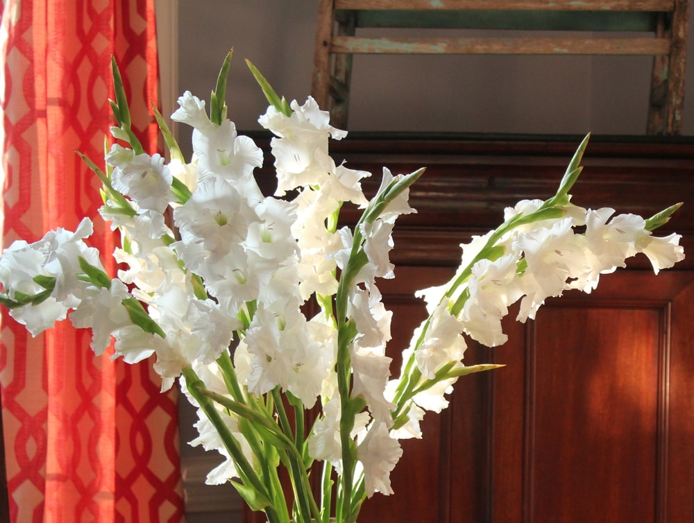 A lovely bouquet of gladiolas displayed in a home.