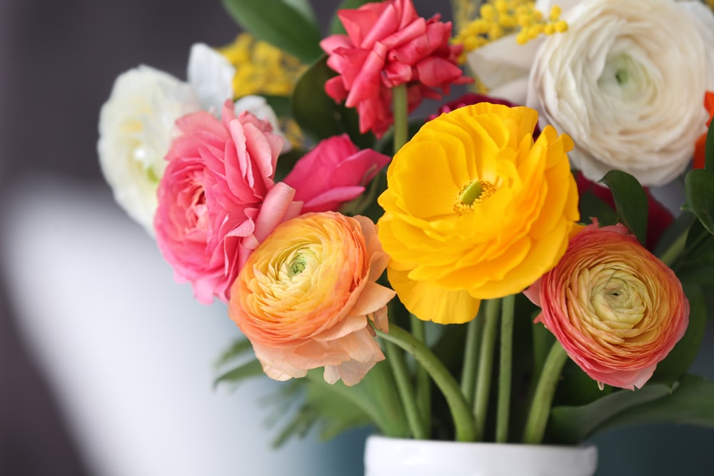 A close up of a colorful bouquet of ranunculus flowers.