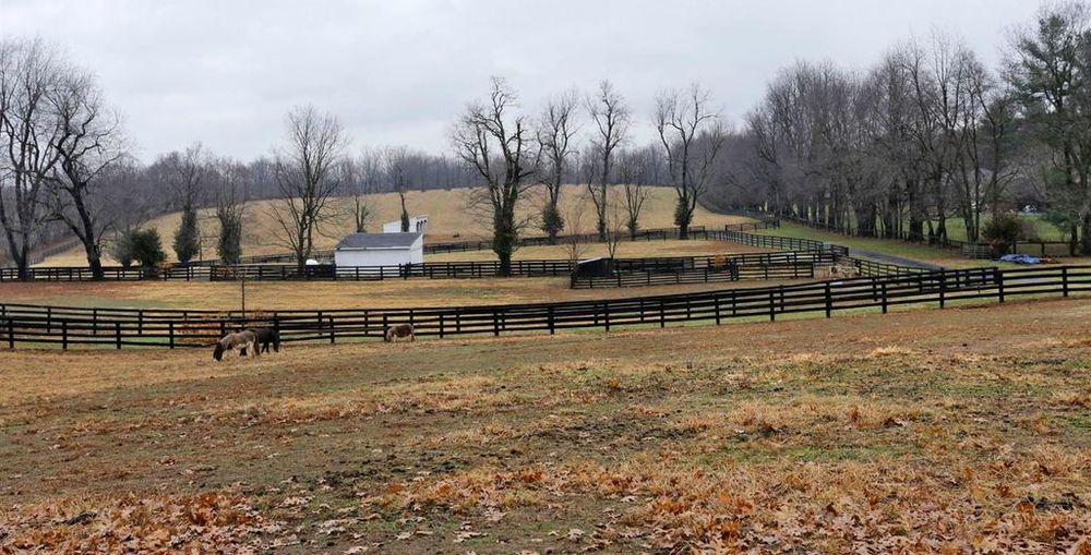 This is a view of the rest of the landscape of the large property with vast open spaces for horses fenced by wood and tall trees. Images courtesy of Toptenrealestatedeals.com.