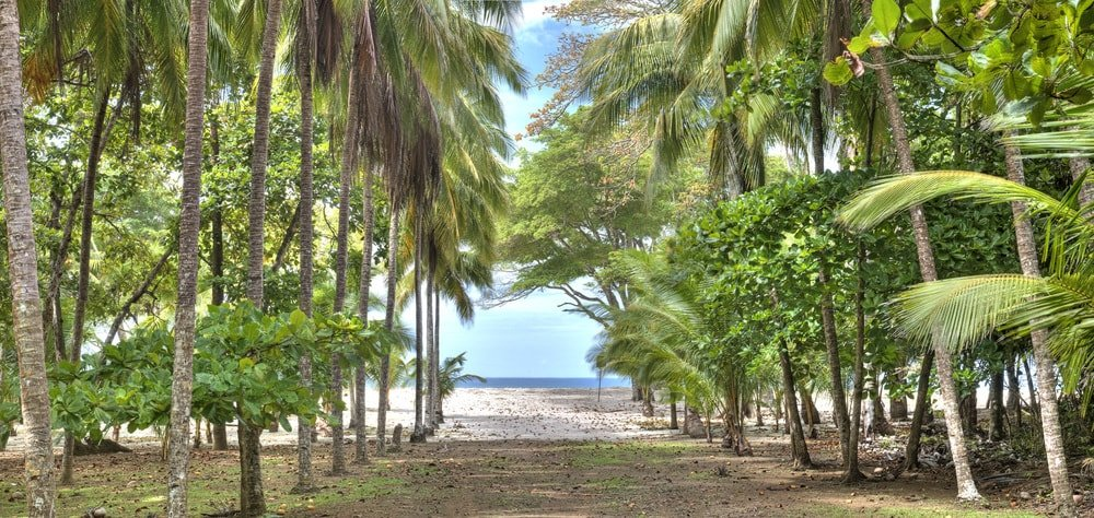 From the house, there is a lovely walkway lined with tall tropical trees leading the way to the beach. Images courtesy of Toptenrealestatedeals.com.