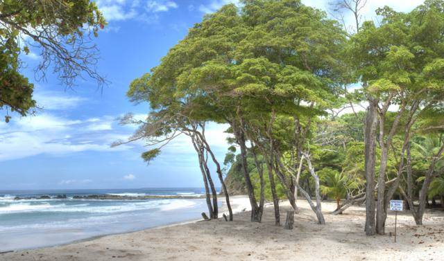 This is the beach at the end of the lovely walkway lined with tall trees. Images courtesy of Toptenrealestatedeals.com.