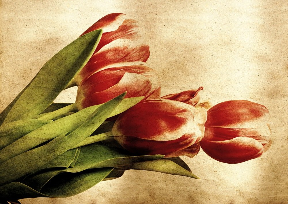 A cluster of beautiful tulips.