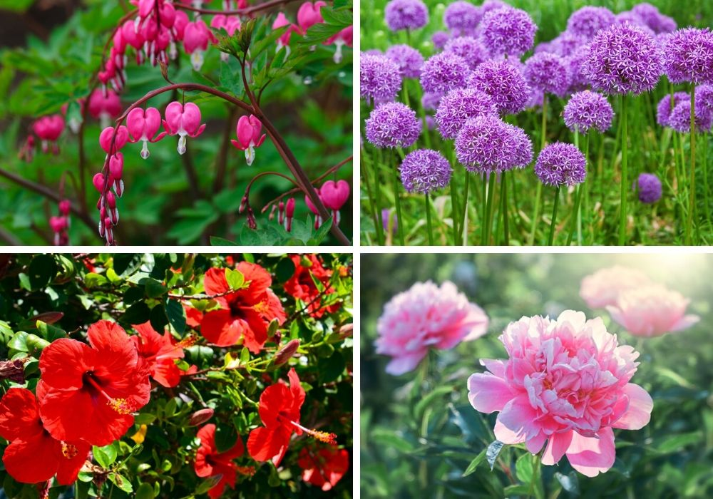 A collage of some of the prettiest perennial flowers.