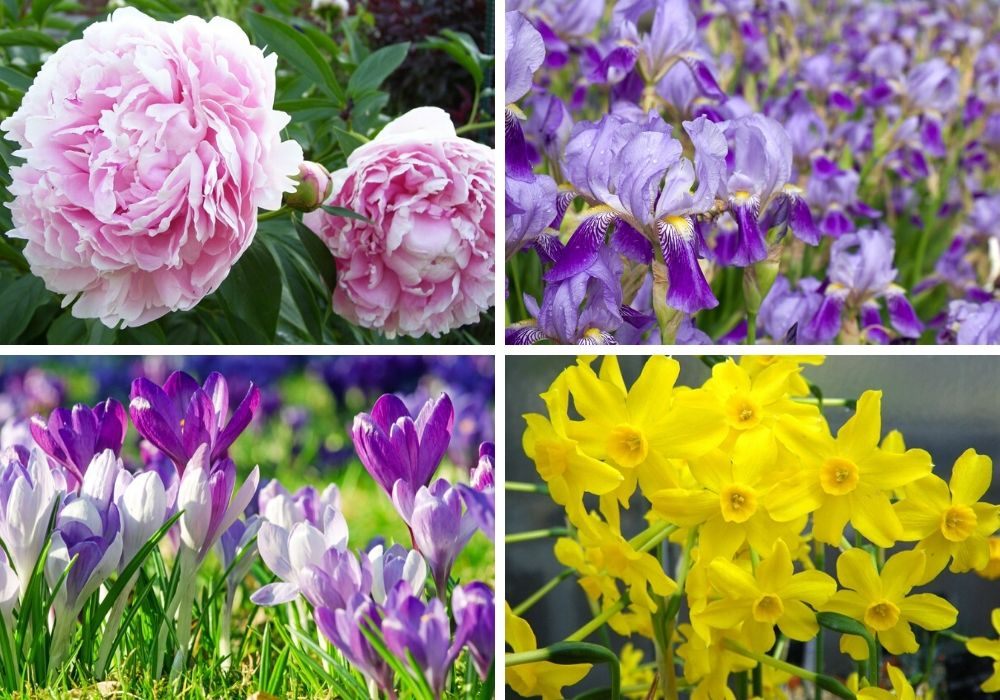 A collage of some of the prettiest spring flowers.