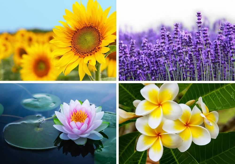 A collage of some of the prettiest summer flowers.