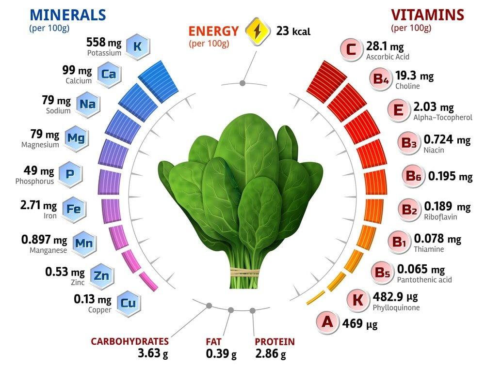 Spinach Nutritional Chart