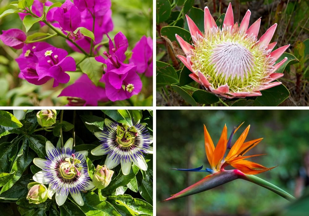 A collage of some of the prettiest tropical flowers.