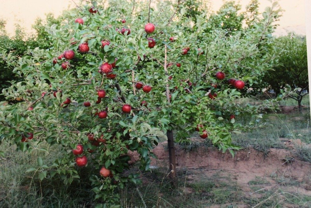 And there's a red apple tree as well. Images courtesy of Toptenrealestatedeals.com.