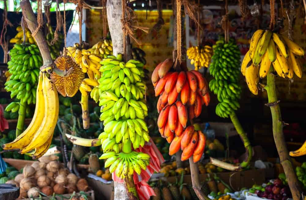 The various types of bananas.