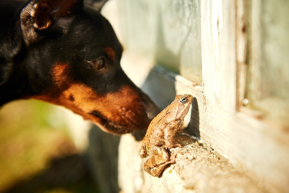 A dog and a frog peeping through a window.