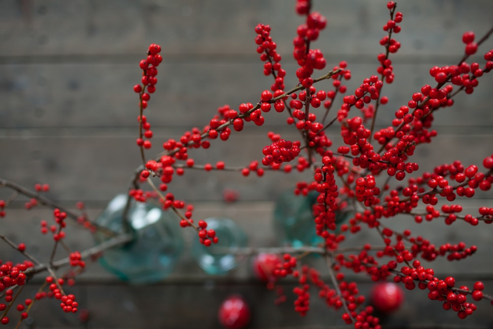 A look at the bright red clusters of winterberry.
