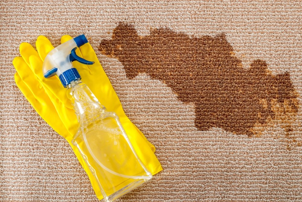 A pair of rubber gloves and a spritzer beside the stain of the carpet.