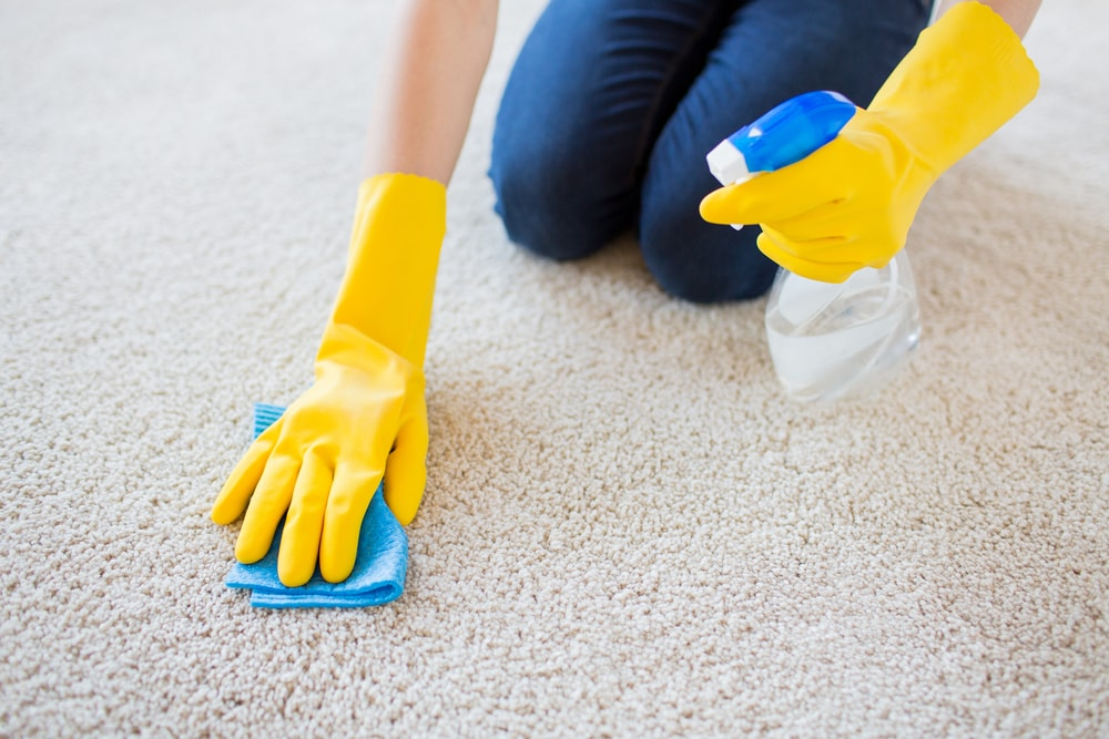 Gloved hands cleaning the carpet with a cloth and a spritzer.
