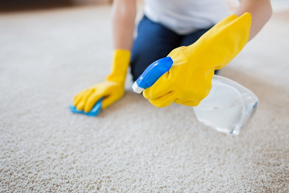 Gloved hands cleaning the beige carpet with a spritzer that has vinegar in it.