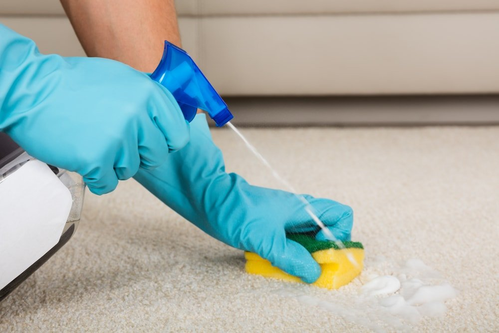 Gloved hands sponging off the stain of the carpet.