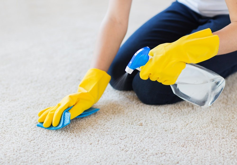 A pair of gloved hands cleaning the beige carpet with a spritzer and rag.