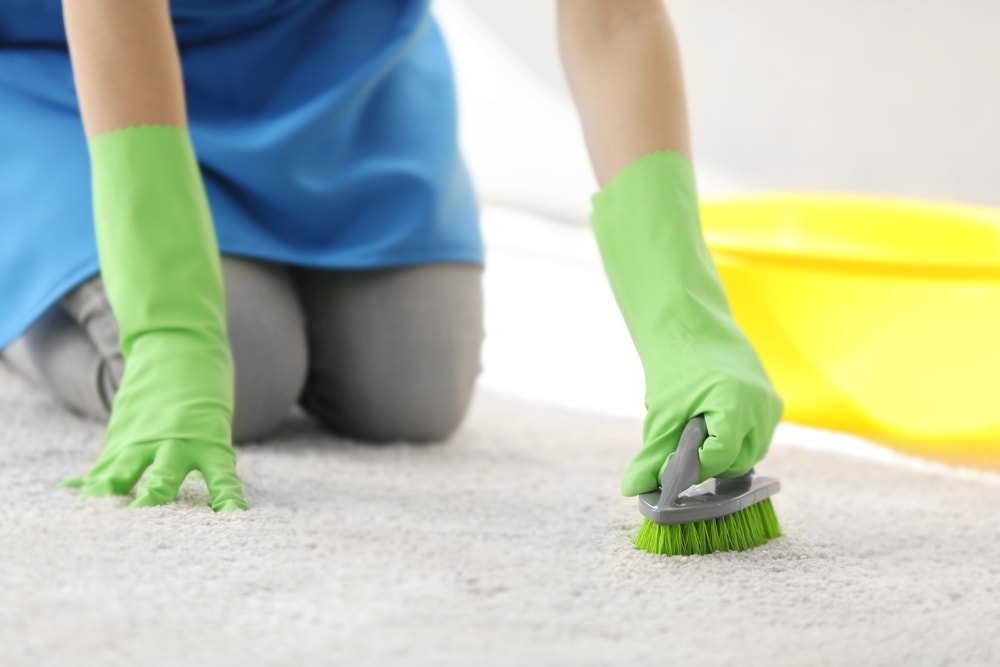 A close look at a woman with gloves cleaning the carpet with a brush.