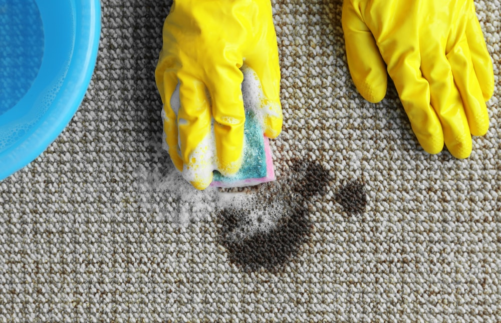 Gloved hands cleaning the gray carpet with a soapy sponge.