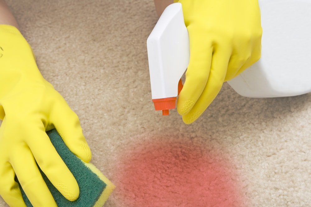 A pair of gloved hands scrubbing the red stain on the carpet.