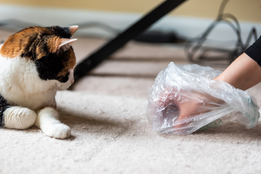 A hand with a plastic bag picking up the cat's vomit off the carpet.