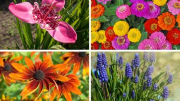 A collection of beautiful sun-loving flowers.