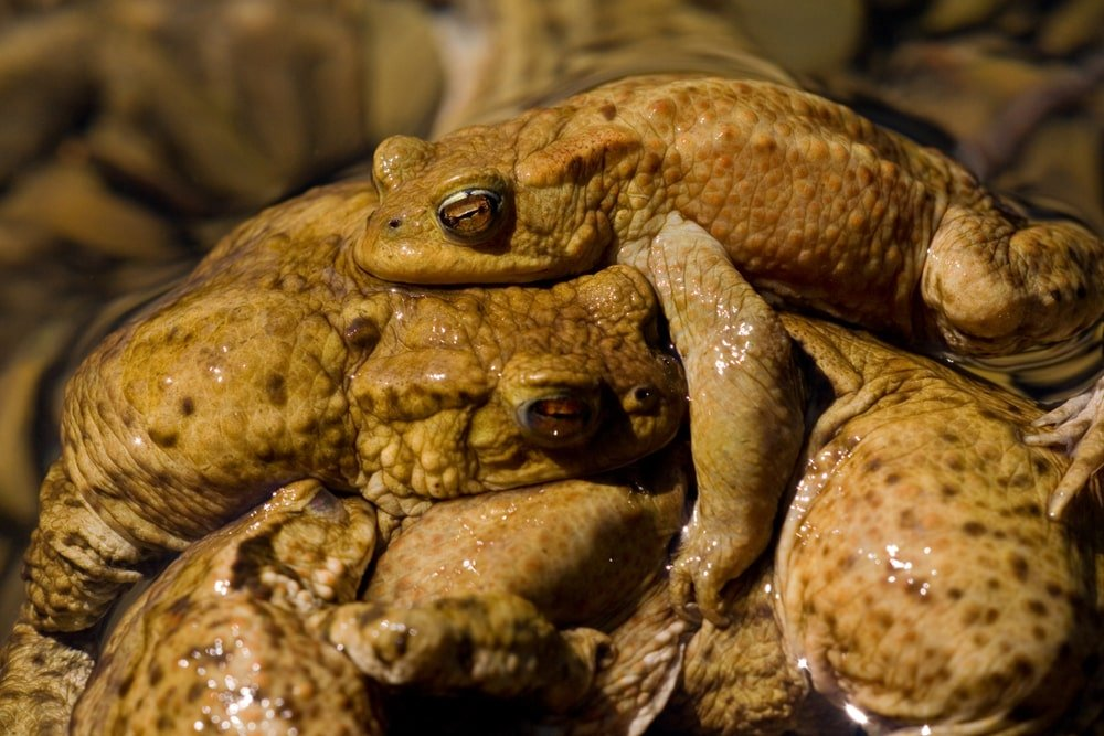 A group of toads.