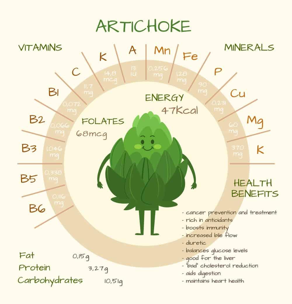 Artichoke nutrition facts chart