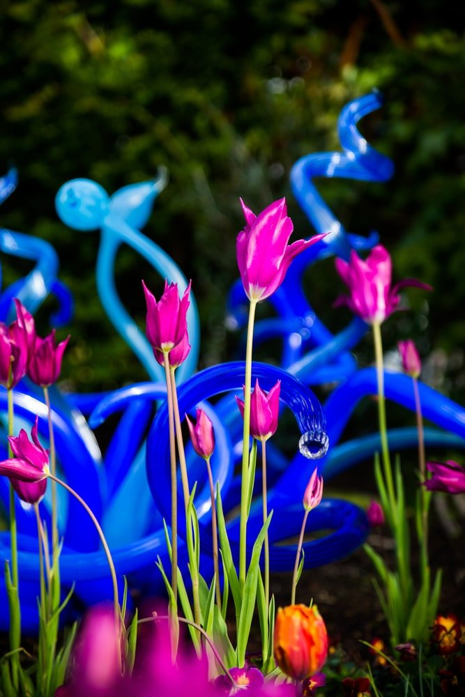 A look at tulips in front of blown glass artwork.