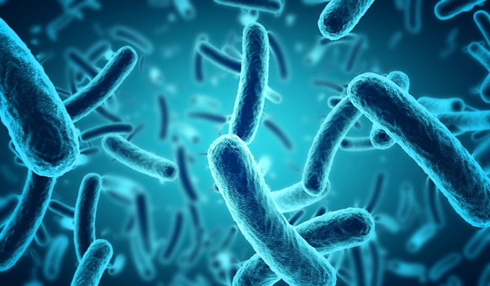 Microscopic blue bacteria.