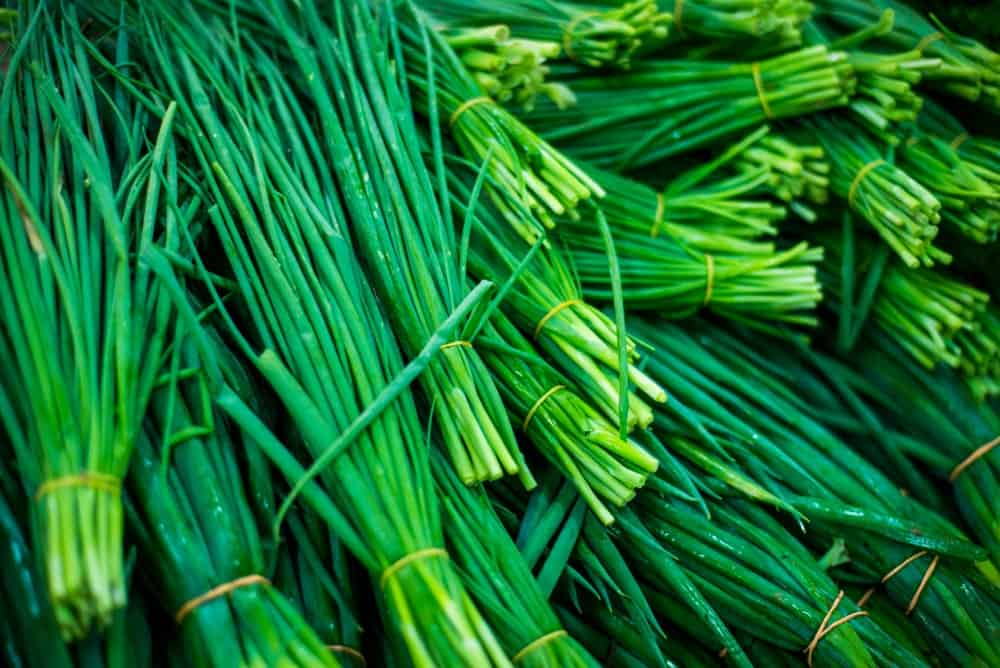 Bundles of chives