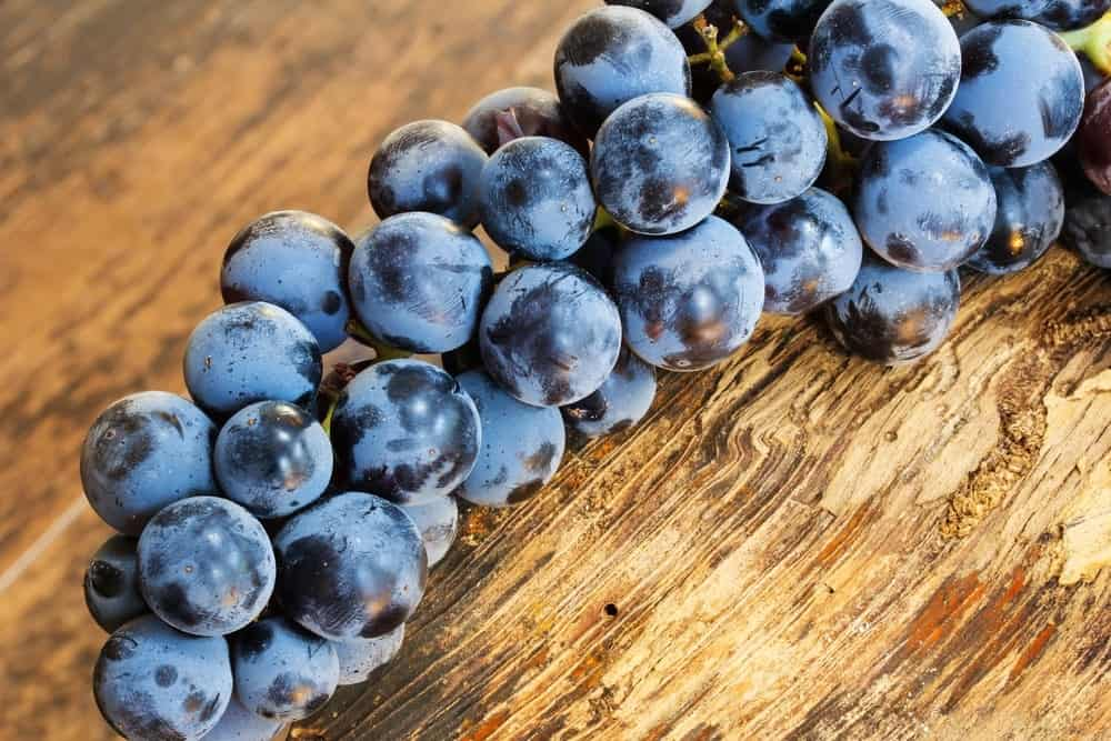 Concord grapes on a wooden table.