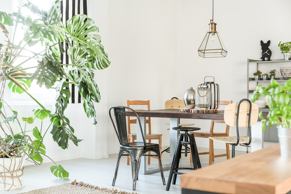 Dining room with industrial-style furniture and indoor plants.